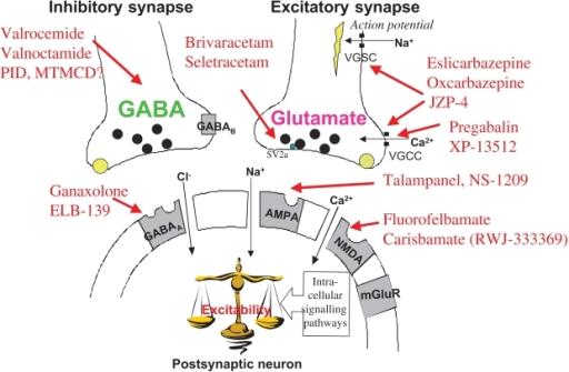 How does Gabapentin Work ?